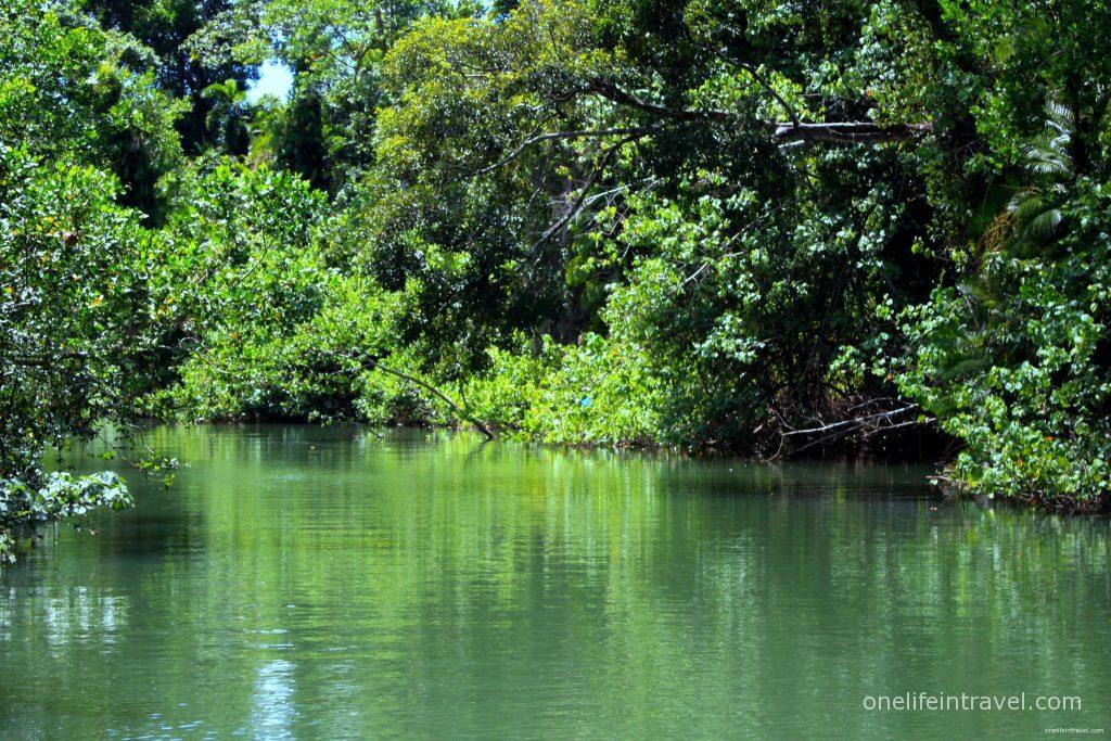 daintree_river