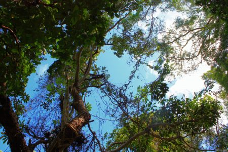 Il Queensland e la foresta pluviale di Daintree