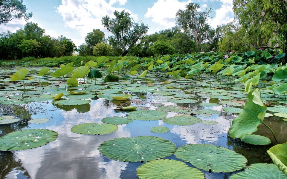 Australia: Darwin e Kakadu National Park