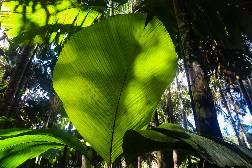 Foresta Coco de Mer Praslin